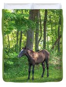 Young Brown Colt Duvet Cover