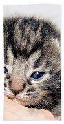 Kitten In A Hand Bath Towel