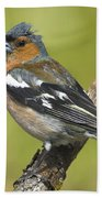 Male Chaffinch Bath Towel