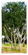 Trees In A Suburban Neighborhood In Summer Bath Towel