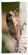 03 New Forest Cicada  Bath Towel