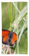 07 Balkan Copper Butterfly Bath Towel