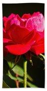 A Red Rose Bath Towel
