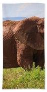 African Desert Elephant Bath Towel