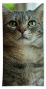 American Shorthair Cat Profile Bath Towel