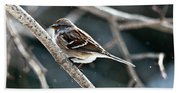 American Tree Sparrow  Bath Towel