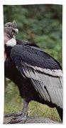 Andean Condor Male Cayambe Ecuador Bath Towel