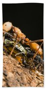 Army Ant Carrying Cricket La Selva Bath Towel