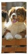 Australian Sheepdog Puppies Bath Towel