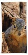 Baby Fox Squirrel Bath Towel