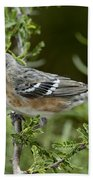 Bay-breasted Warbler Bath Towel