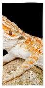 Bearded Dragon Pogona Sp. On Rock Bath Towel
