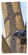 Black And White Warbler Bath Towel