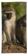 Black-faced Vervet Monkey Bath Towel
