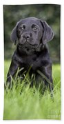Black Labrador Puppy Bath Towel
