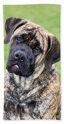 Boerboel Dog Bath Towel