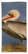 Brown Pelican Portrait California Bath Towel
