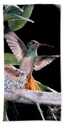 Buff-bellied Hummingbird At Nest Bath Towel