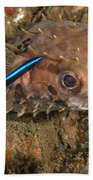 Burrfish And Cleaner Goby Bath Towel