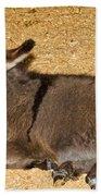 Burro Foal Bath Towel
