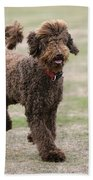 Chocolate Labradoodle Running In Field Bath Towel