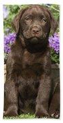 Chocolate Labrador Puppy Bath Towel