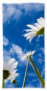 Close-up Shot Of White Daisy Flowers From Below Bath Towel