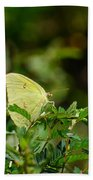 Clouded Sulphur Butterfly Bath Towel
