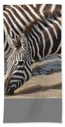 Common Zebras Drinking Water Bath Towel