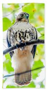 Coopers Hawk Perched On Tree Watching For Small Prey Bath Towel