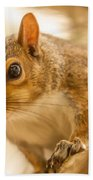 Curious Squirrel Bath Towel