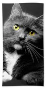 Domestic Gray And White Short Hair Hand Towel