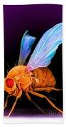 Drosophila Bath Towel