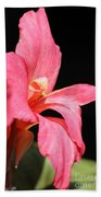 Dwarf Canna Lily Named Shining Pink Bath Towel