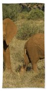Elephants Covered In Red Dust Hand Towel by John Shaw