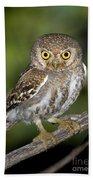 Elf Owl Bath Towel