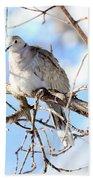 Eurasian Collard Dove Bath Towel