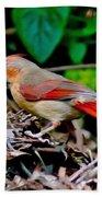 Female Cardinal Bath Towel