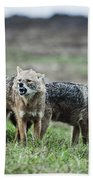 Golden Jackal Canis Aureus Bath Towel