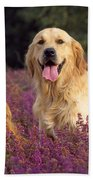 Golden Retriever Dogs In Heather Bath Towel
