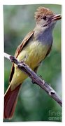 Great Crested Flycatcher With Captured Bath Towel