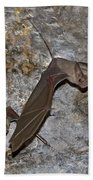 Greater Mouse-tailed Bat Rhinopoma Microphyllum Bath Towel