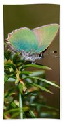 Green Hairstreak Bath Towel