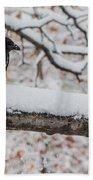 Hooded Crow First Snow Bath Towel