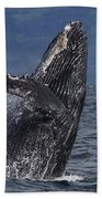 Humpback Whale Breaching Prince William Bath Towel