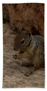 Hungry Squirrel Bath Towel