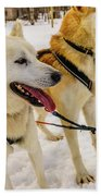 Husky Sled Dogs, Lapland, Finland Hand Towel
