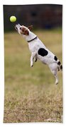 Jack Russell Jumping For Ball Bath Towel