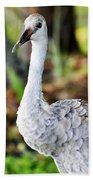 Juvenile Sandhill Crane Grus Canadensis Pratensis II Usa Bath Towel