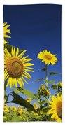 Laval, Quebec, Canada Sunflowers Bath Towel